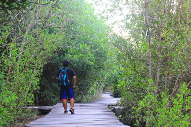 Tour Mangrove by Pandan Sari Water sport