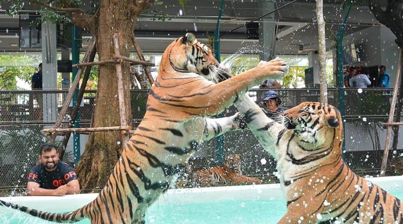 Pattaya Tiger Park Admission