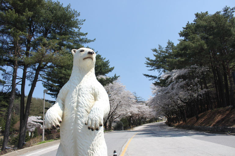 Bears Town, Pocheon