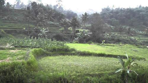 GG House Puncak, Bogor