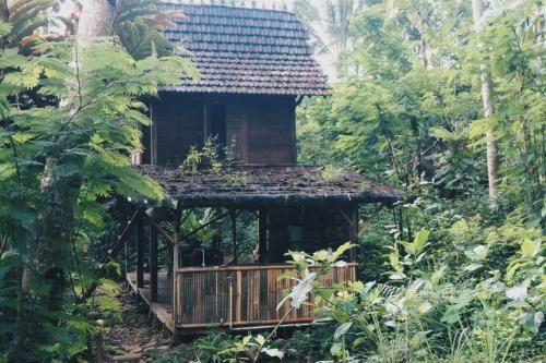 Java Jungle, Semarang