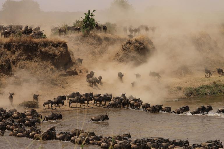 Gnu Mara River Camp, Serengeti