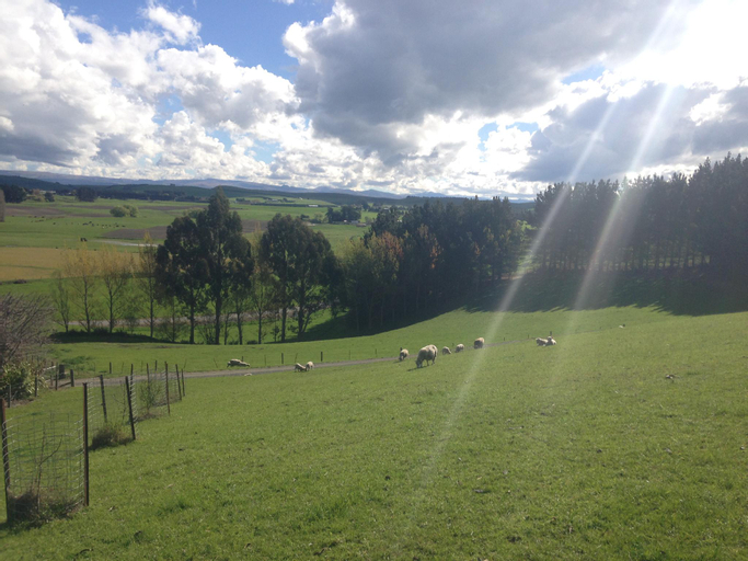 Gumtree Farmstay, Waitaki