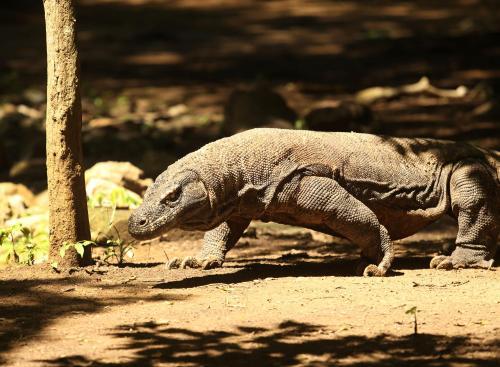 Alila Purnama - Komodo, Manggarai Barat