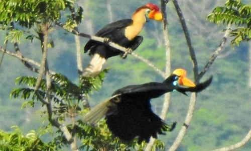 Tangkoko Birds&WildLife Animals Tour, Bitung
