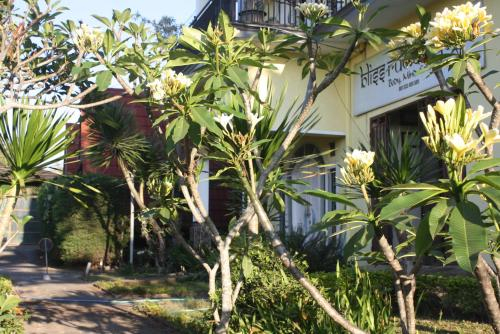 Homestay Bliss, Malang