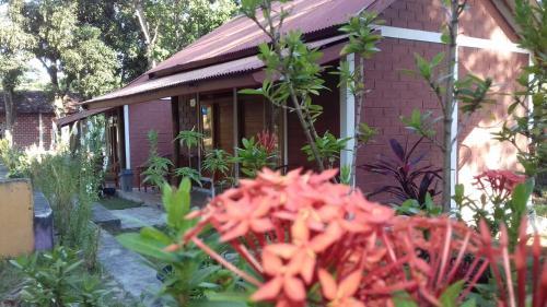 New Cottage Asri Karimunjawa, Jepara