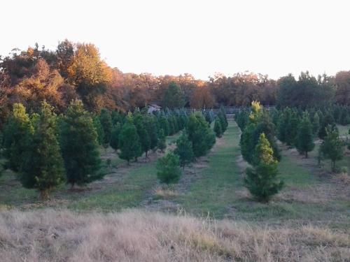 Kelumac Christmas Tree Farm B&B, Robertson