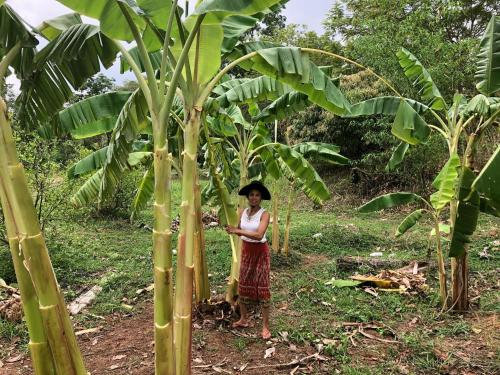 Suwan organic farmstay, Phen
