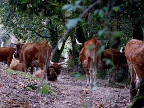 Quinta Parque Nacional Peneda Geres, Ponte da Barca