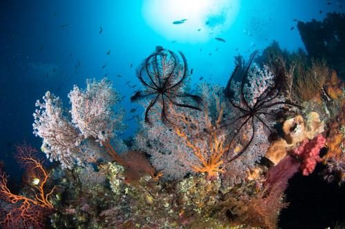 Bali Dive Resort Amed, Karangasem