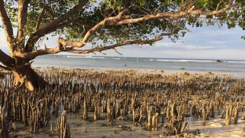 Side Beach Bungalows, Lombok
