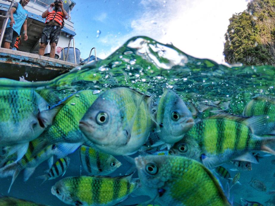 Maya Bay Sleepaboard Resort, Pulau Phi Phi