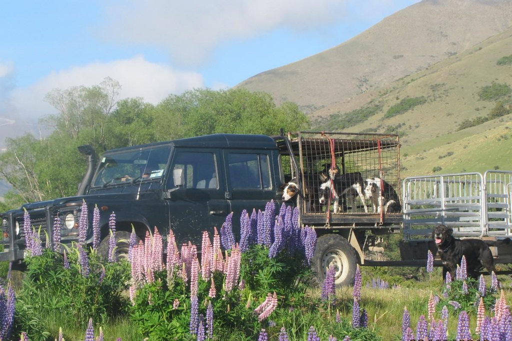 Dunstan Downs High Country Sheep Station Farmstay & Backpackers, Waitaki