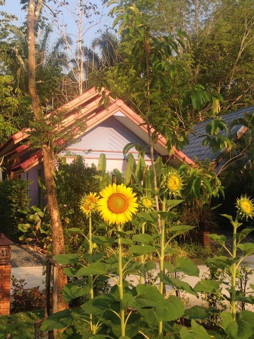 Pakasai Resort (Nuea Khlong), Nua Khlong