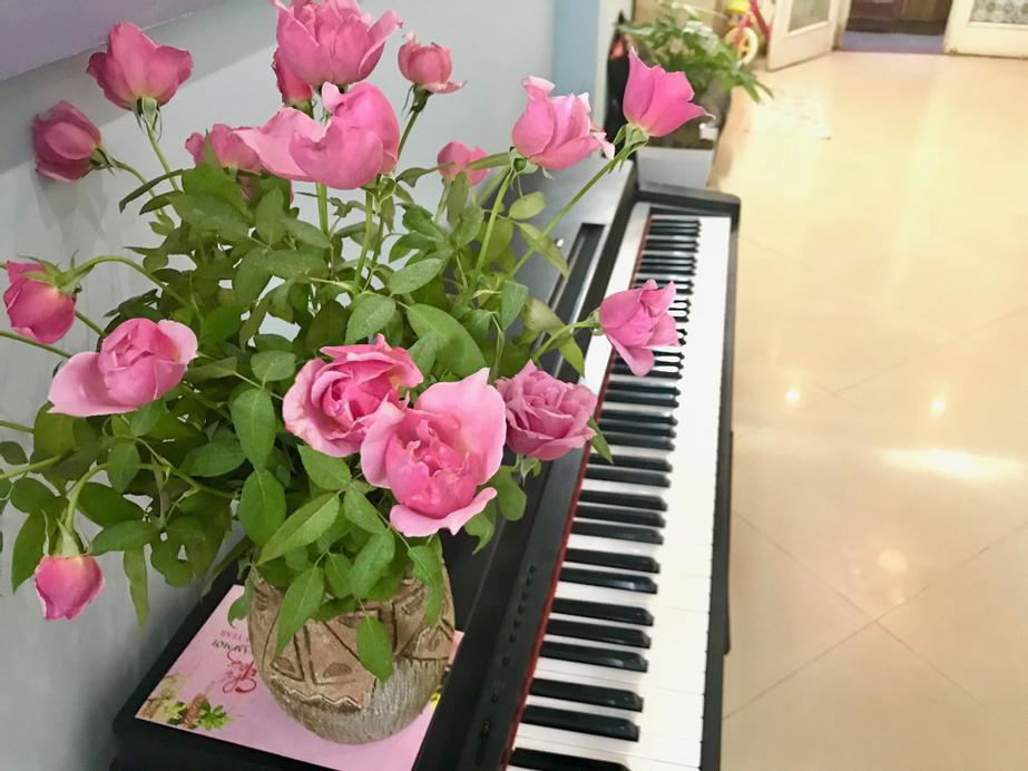 The Rose Home, Cầu Giấy