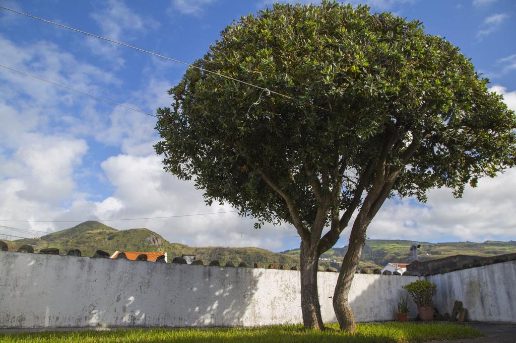 Magnólia, Ponta Delgada