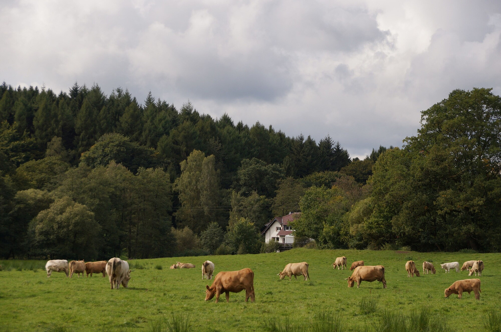 Pension Mausmühle, Westerwaldkreis