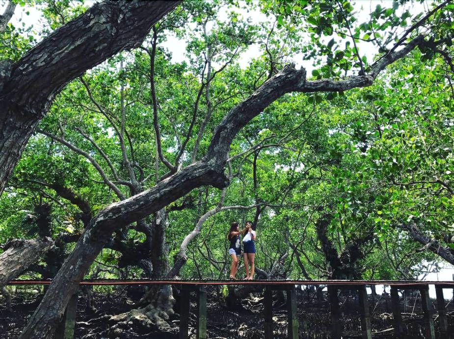 Talikud Island Mangrove Beach Resort, Samal City