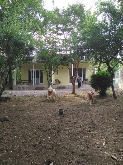 GUESTS & DOGS HOUSE HALE ILIO, Itō