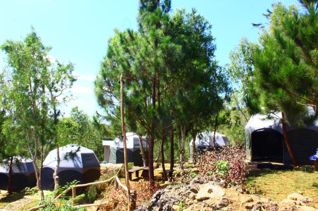 Bukit Lintang Sewu Glamping, Bantul