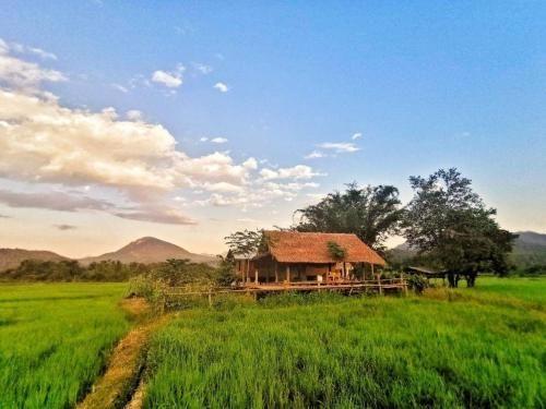 Wanmai Farm Stay Muangkong วันใหม่ฟาร์มสเตย์ เมืองคอง เชียงดาว, Chiang Dao