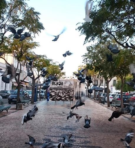 City Central Casa, Olhão