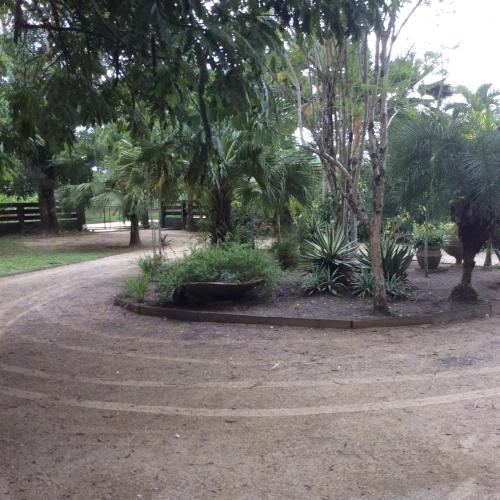 Bamboe, Meerzorg