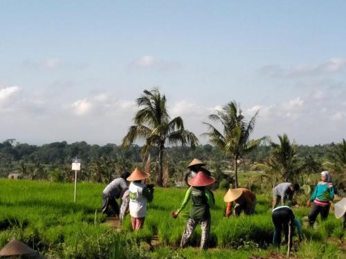 Andini Homestay, Lombok