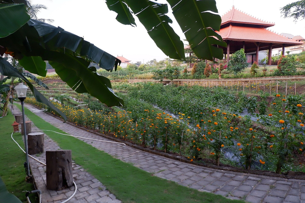 Apple Resort Retreat Spa, Tabanan