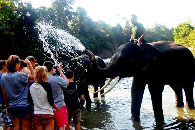 1 Day Tour Tangkahan by WeTravel