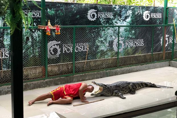 Crocodile Show Porosus Admission Ticket
