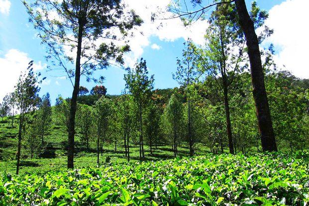 Agrowisata Gunung Mas Puncak, Curug 7 Cilember, And Cimory Riverside Day Tour