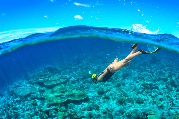 Cham Island Sea Walk and Snorkeling Experience by Speedboat from Hoi An