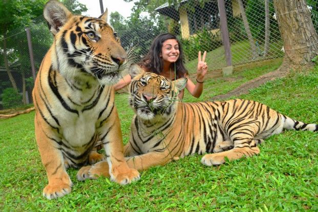 Tiger Kingdom Ticket in Chiang Mai with Transfers