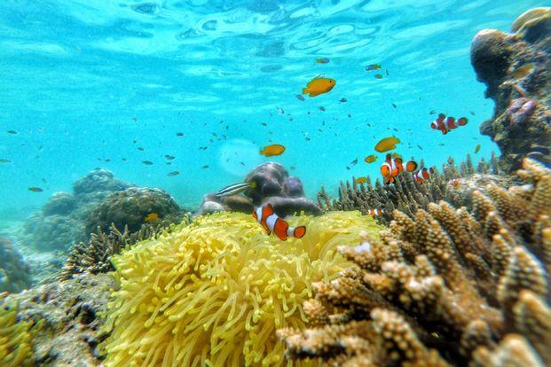 Water Activity Gili Ketapang - Probolinggo by My4dventure