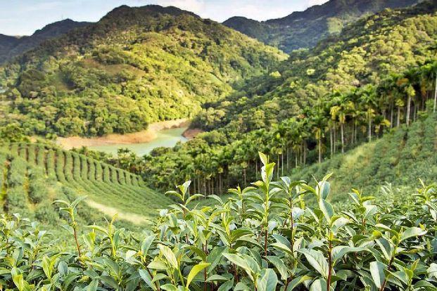 Thousand Island Lake and Tea Plantation (English and Japanese Tour)
