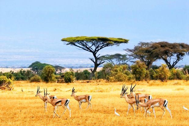 Baluran National Park Safari Tour by Dialoog Banyuwangi