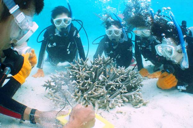 Fun Diving Experience on Ishigaki Island (license required)