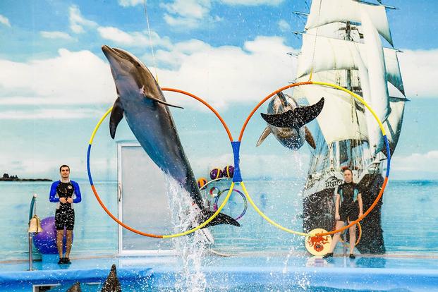 [SALE] Phuket Dolphin Show Ticket