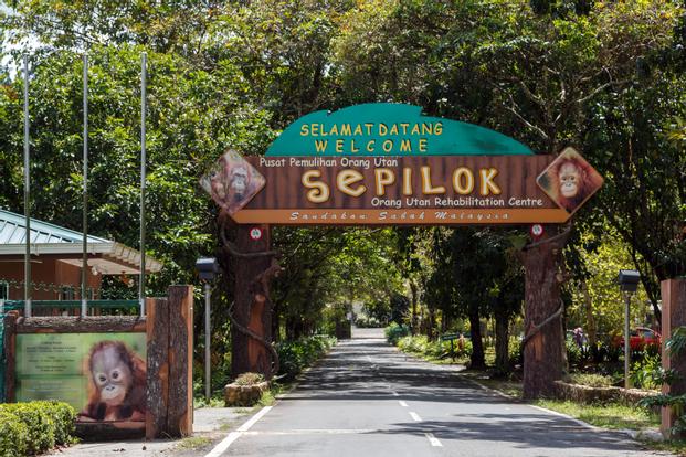 Sepilok Orang Utan Rehabilitation Centre, Sunbear Conservation Centre and Rainforest Discovery Centre Half Day Tour in Sandakan