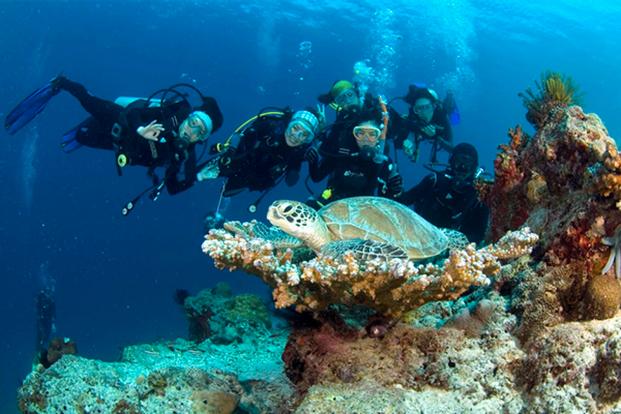 Sepanggar Island Diving Experience