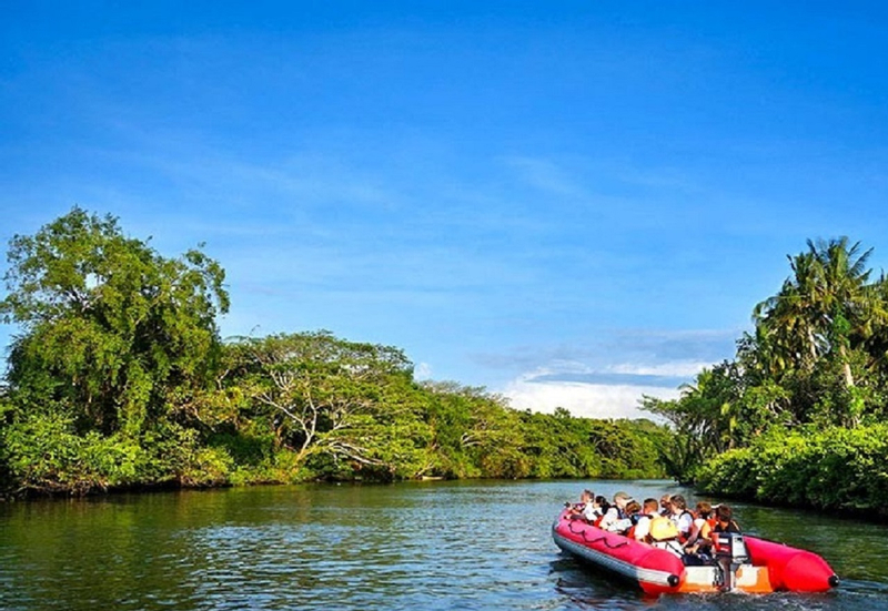 Kawa Kawa Wildlife and Fireflies River Cruise