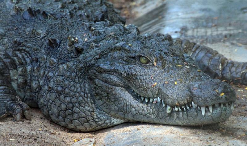 Jong's Crocodile Farm & Annah Rais Longhouse Adventure