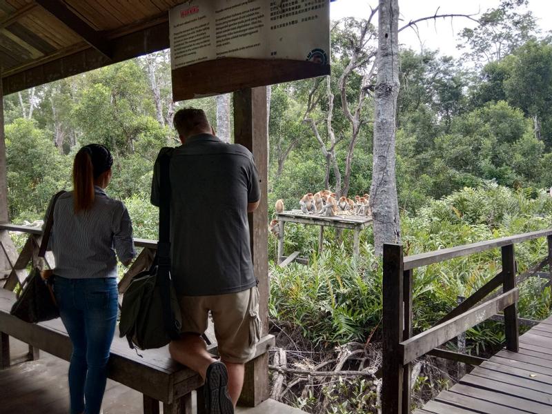 Sepilok Orang Utan and Labuk Bay Proboscis Monkey Sanctuary Half Day Tour in Sandakan