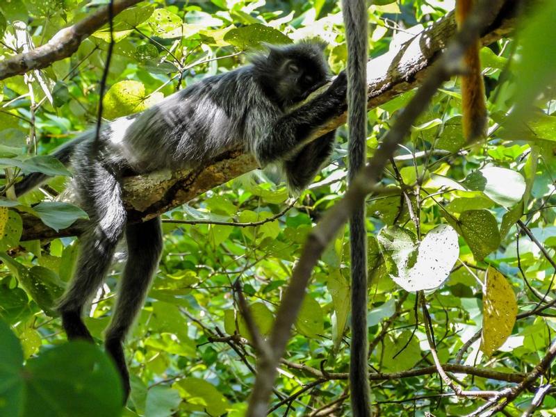 2D1N Sarawak Bako National Park Tour with Night Safari Walk