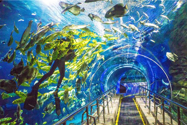 Beijing Underwater World Ticket