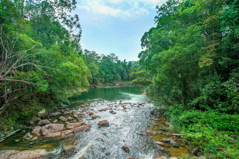 Kayaking and Bird Walking Join-In Tour at Taman Negeri Rompin in Pahang