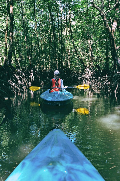 Private Mangrove Kayak Tour with Transfers and Meal in Langkawi