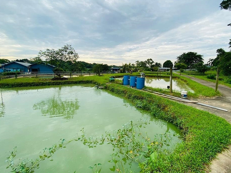 Agriculture and Fish Farming Sustainability Tour at Jalan Lekar